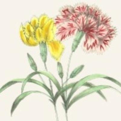 Palmarès : Maisons fleuries 2020
