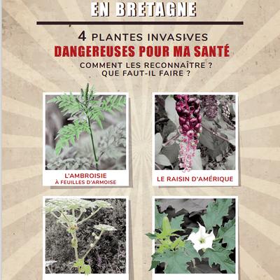 Plantes invasives dangereuses pour votre santé