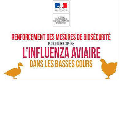 Prévention grippe aviaire