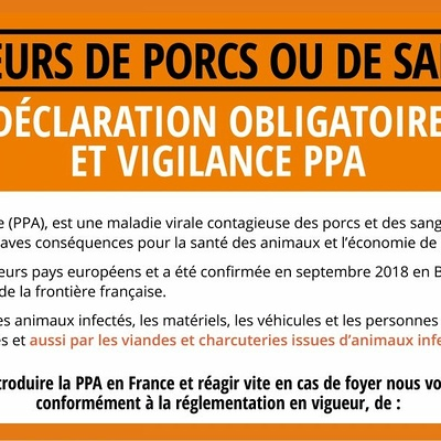 Vigilance Peste Porcine Africaine (PPA)