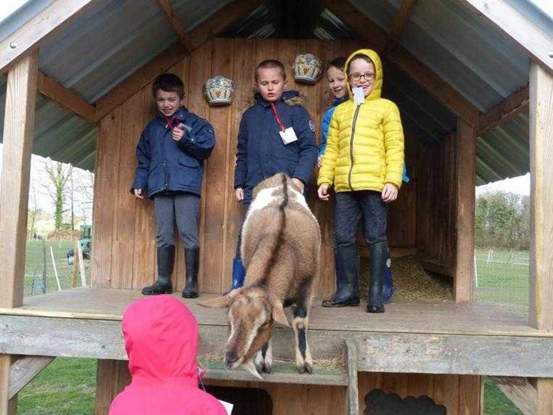 Photos de la visite de la ferme pédagogique de Saint-Fiacre image6