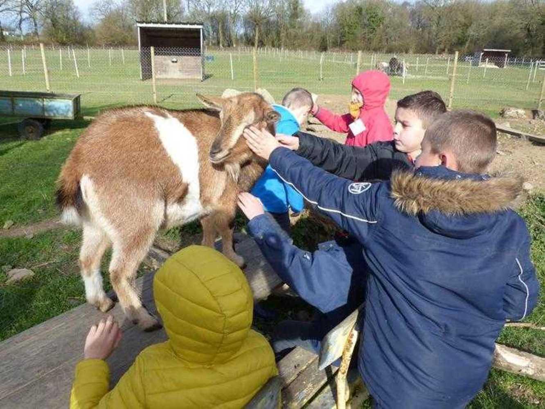 Photos de la visite de la ferme pédagogique de Saint-Fiacre image7