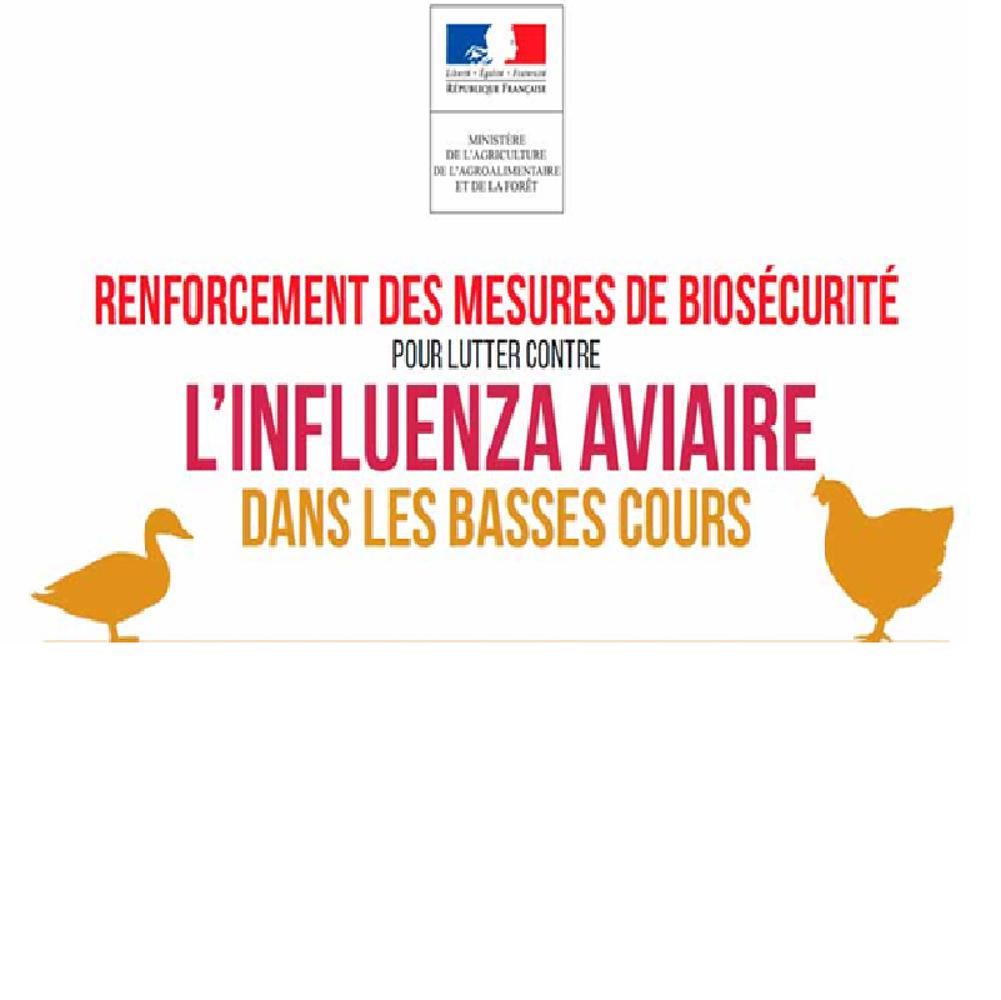 Prévention grippe aviaire 0