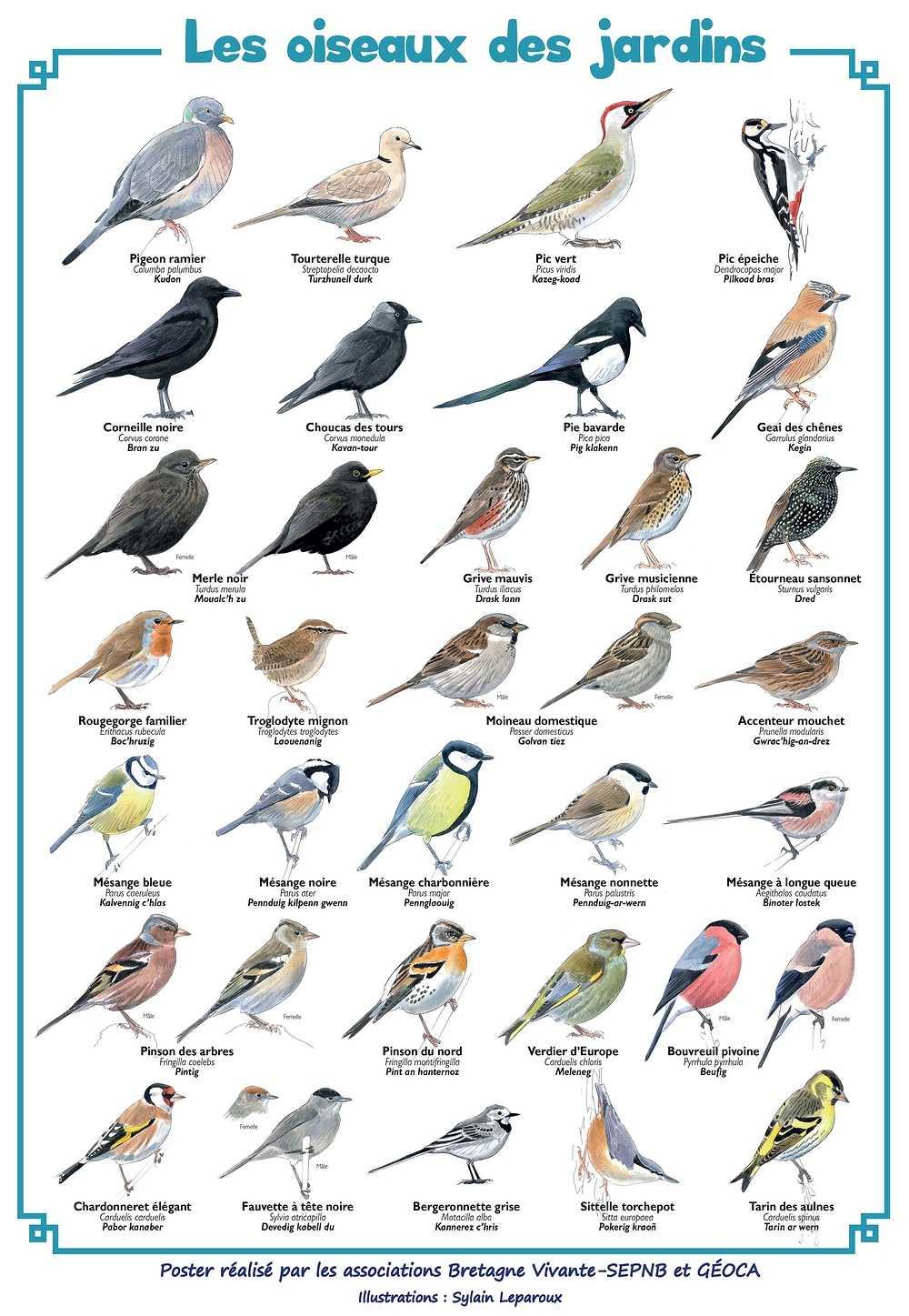 Enquête oiseaux des jardins affiche22021