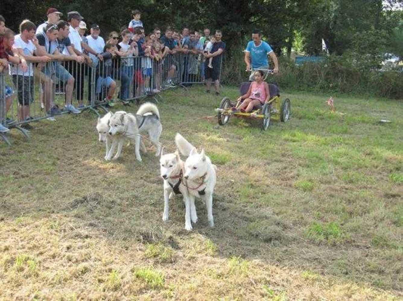 Pain et Battages - 27 août 2017 chiensdetraineaux4